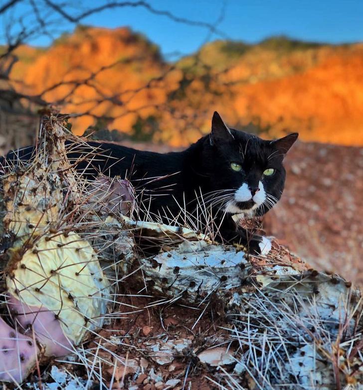 Фото №4 - Замурчательные компаньоны: коты-путешественники