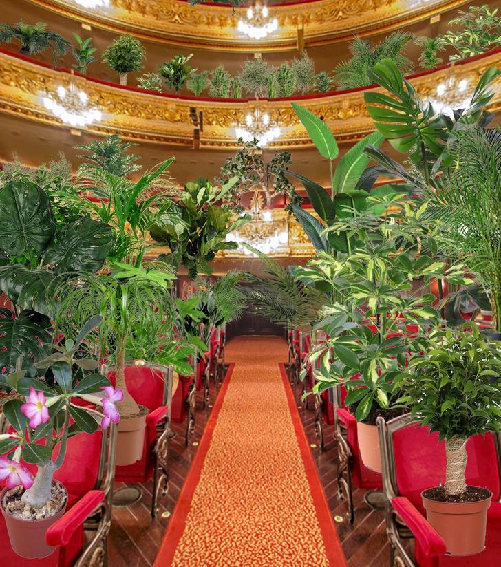 Фото №2 - В Барселоне устроили концерт для растений