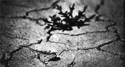Фото №2 - Там, глубоко под такыром
