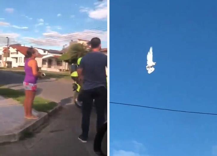 Фото №1 - В соцсетях не могут разгадать загадку «застрявшего в небе» голубя (видео)