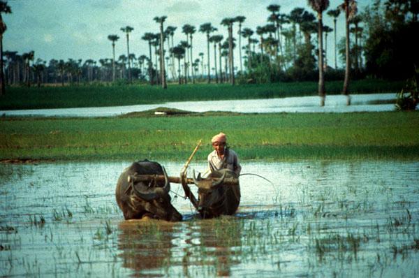 Фото №2 - Кхмерский вариант «светлого будущего»