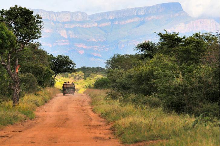 Фото №5 - Язык слонов и львов: словарь рейнджера ЮАР