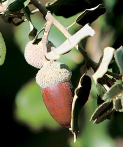 Фото №4 - Иберийский деликатес