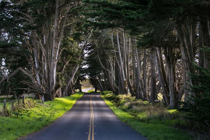 Фото №1 - Подсчитано количество видов деревьев на Земле