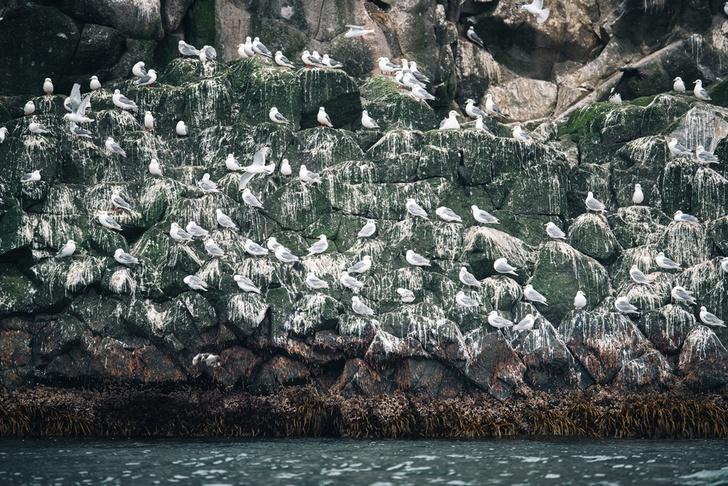 Фото №4 - Командорские острова: край мира или рай на земле?