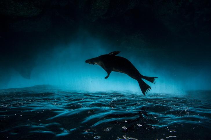Фото №1 - Под водой над водой