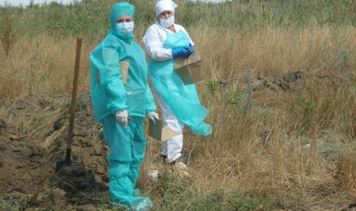 Фото №1 - В Ростове два фермера заразились сибирской язвой