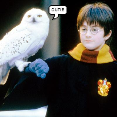 Фото №1 - Тест: Какой ты волшебный питомец из «Гарри Поттера»?