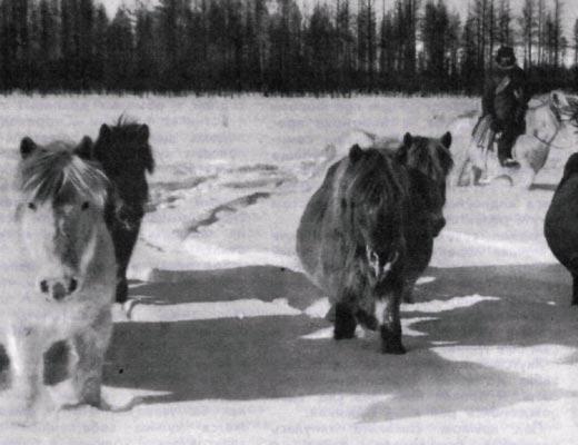 Фото №1 - Полюс долголетия