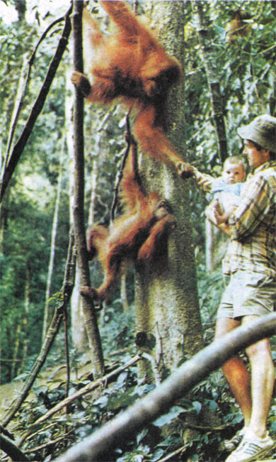 Фото №2 - В лесах Борнео