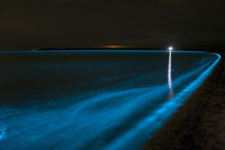 Фото №1 - Вода в заливе у Тасмании окрасилась в необычный цвет