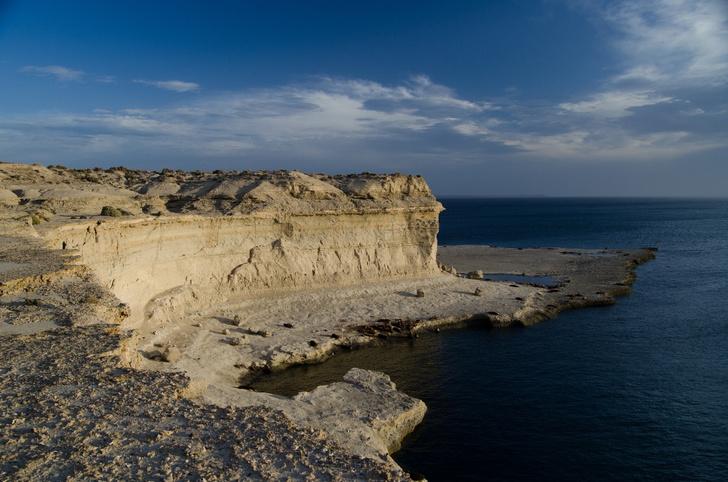 Фото №1 - Звериное царство: полуостров Вальдес