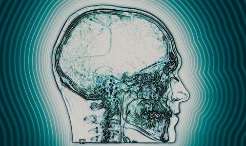 Фото №1 - Ученые обнаружили новые нервные клетки мозга