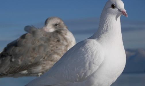 Фото №1 - Роспотребнадзор советует путешественникам держаться подальше от птиц