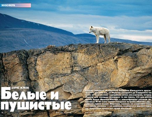 Фото №1 - Белые и пушистые