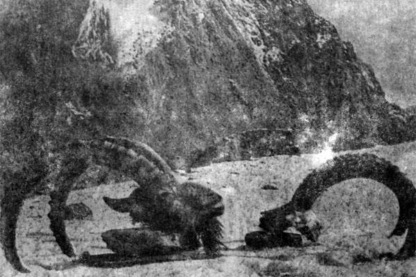 Фото №1 - Рога горного козла и земледелие в горах