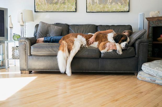 Фото №2 - 9 вещей, которым учат нас домашние животные