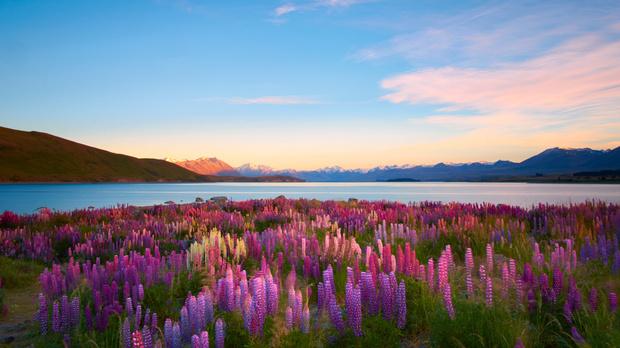 Новая Зеландия - страна, подарившая свои виды киносаге