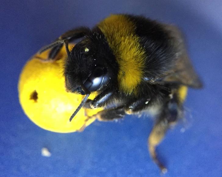 Фото №2 - Поцелуи с неандертальцами, пчелы-футболисты и другие новые открытия