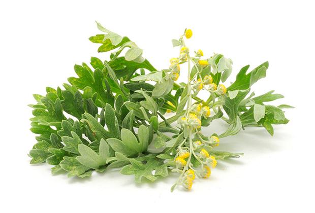 Фото №12 - Самые полезные лекарственные травы