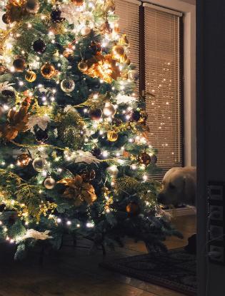 Фото №13 - Каждый год, 31 декабря... Новогодние традиции наших знаменитостей