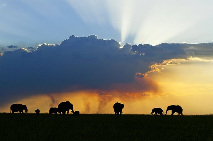 Фото №7 - Зоология: почему слоны не летают