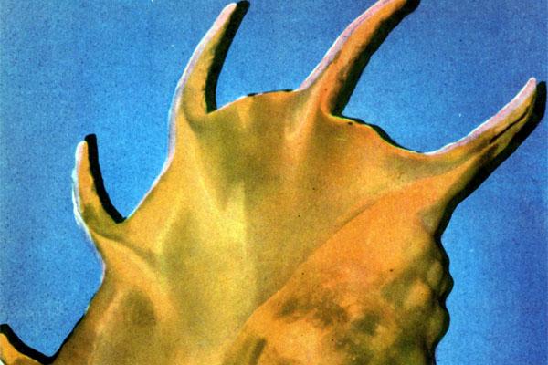Фото №1 - Скульпторы моря