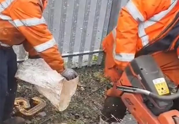 Фото №1 - В Ирландии ученика железнодорожника заставили ловить искры от пилы в мешок «для дальнейшей переработки» (видео)