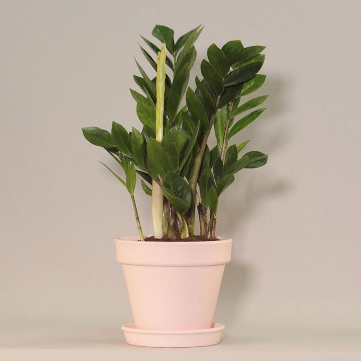 Фото №2 - Самые модные растения этой осени