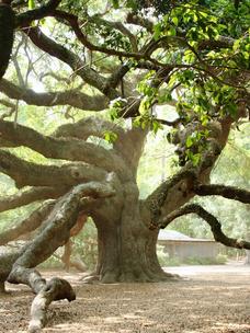 Фото №7 - Тест: Выбери дерево, и мы скажем, во сколько лет ты станешь успешной