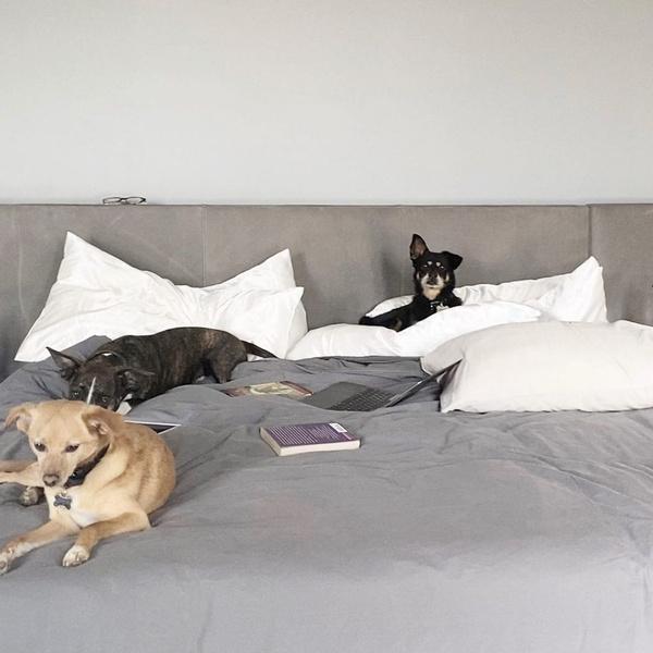 Фото №9 - Милоты пост: любимые собачки знаменитостей 🐶⭐