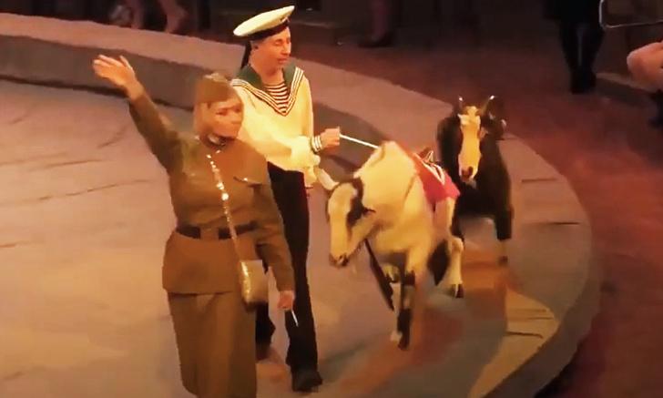 Фото №1 - В цирке Ижевска показали шоу с животными в нацистской форме (видео)