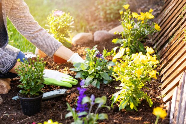 растения отпугивают вредителей