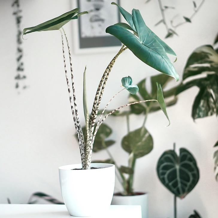 Фото №2 - Тренды 2020: самые модные комнатные растения