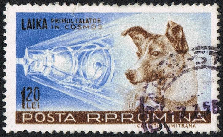 Фото №1 - Хвостатые космонавты: 5 животных, покоривших космос
