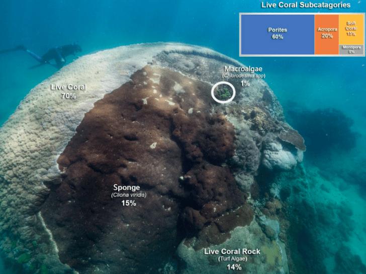 Фото №1 - У берегов Австралии нашли коралл возрастом более 400 лет