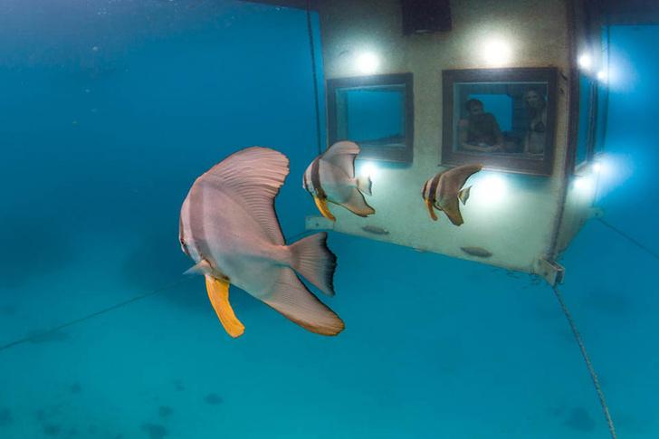Фото №2 - Сон среди рыб