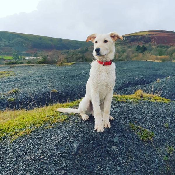 Фото №30 - Если собака без поводка: 15 фото песиков до и после прогулки