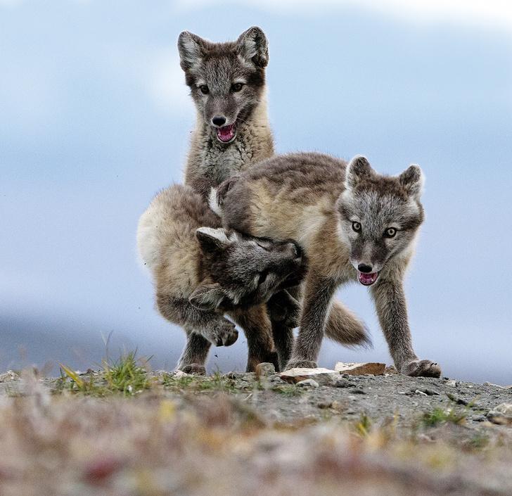 Фото №7 - Зоология: На широкую лапу