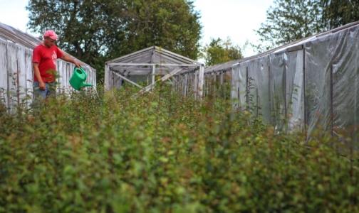 Фото №1 - Для петербургских дачников открываются амбулатории в садоводствах