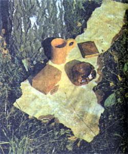 Фото №3 - Свет березовый