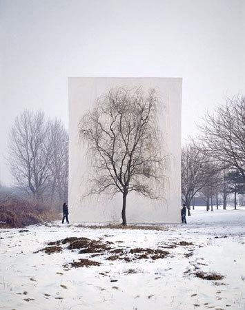 Фото №3 - Myoung Ho Lee's Trees