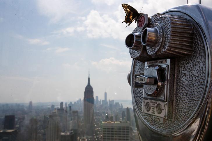 Фото №1 - Как городская жизнь влияет на размеры животных