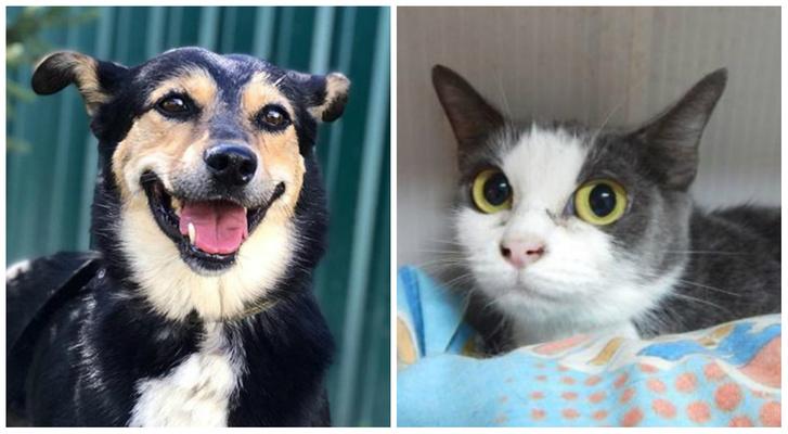 Фото №1 - Котопёс недели: возьми из приюта собаку Мамушку или кошку Кристи