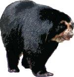 Фото №6 - Хозяин тверского леса