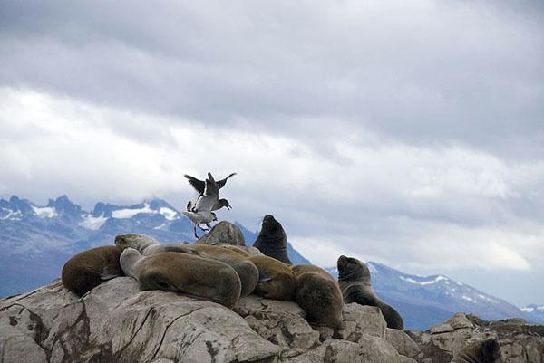 Фото №4 - Огнеземельские ворота Антарктиды