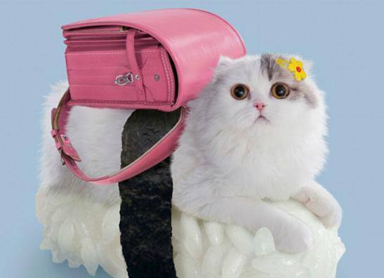 Фото №1 - Японские котосуши всполошили интернет