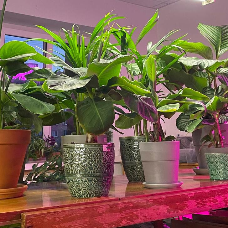 Фото №4 - Всё об увлажнении растений: советы эксперта