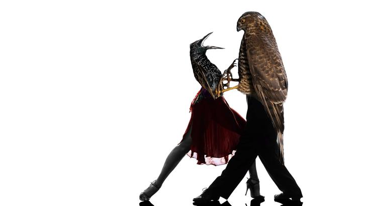 Фото №10 - Лучшие фотожабы про разборку ястреба и скворца