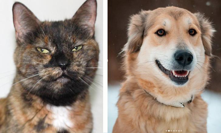 Фото №1 - Котопёс недели: кошка Ладушка и собака Умка